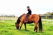 16hh TB mate  on HorseYard.com.au