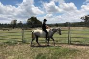 Registered Welsh Gelding on HorseYard.com.au