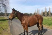Dual Registered Mare on HorseYard.com.au