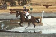 *Price Reduced* Classy Broodmare on HorseYard.com.au