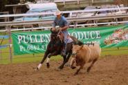 Nice black mare on HorseYard.com.au
