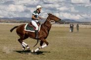 BY Mare on HorseYard.com.au