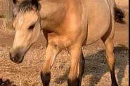 ANDELAIN ANU on HorseYard.com.au