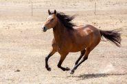 MarLou Mulan - WalerX on HorseYard.com.au