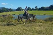 One in a million  on HorseYard.com.au