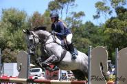 Grey Thoroughbred on HorseYard.com.au