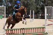 Performance Pony 12.1hh 5yo on HorseYard.com.au