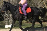 STB Gelding -Jimmy on HorseYard.com.au