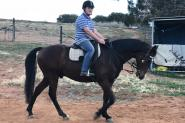 Adults ASH Gelding on HorseYard.com.au