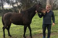 Horse For Sale  on HorseYard.com.au