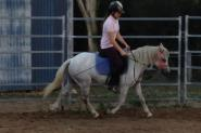 Registered Australian Pony Gelding on HorseYard.com.au