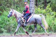 Endurance Arabian Mare on HorseYard.com.au