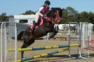 Stunning Eventer With Top Potential  on HorseYard.com.au