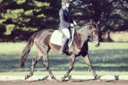 Belle, 15.2 thoroughbred mare  on HorseYard.com.au