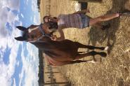 Lively Blue Jean NZ on HorseYard.com.au