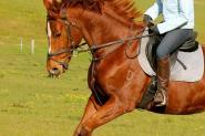 Gorgeous and Fun OTTB on HorseYard.com.au