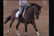 Lovely Horse for Free Lease / Horse Share ASAP!!! on HorseYard.com.au