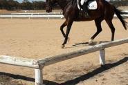 Your next best friend! on HorseYard.com.au
