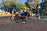 ( Secret )  15.2hh , 9yo, mare , thoroughbred, all rounder on HorseYard.com.au