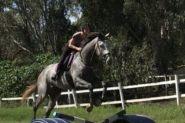 Thoroughbred gelding 18hh on HorseYard.com.au