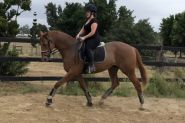 Jimmy Choo  16.1hh 13 y/o OTT Thoroughbred Gelding on HorseYard.com.au