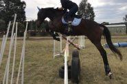Talented showjumper or eventer  on HorseYard.com.au