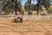 Registered qh mare on HorseYard.com.au