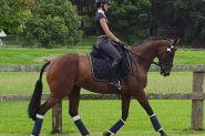 *FLASHY NEWCOMER* on HorseYard.com.au