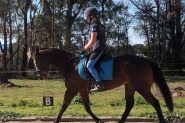 Life's a Breeze! on HorseYard.com.au