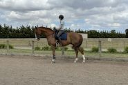 Flashy 8yo gelding  on HorseYard.com.au