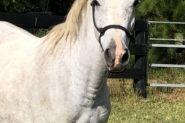 Fairview Simply A Dream on HorseYard.com.au