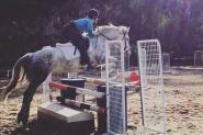 Dee Dee on HorseYard.com.au