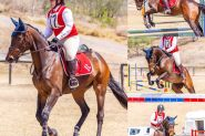 POTENTIAL PLUS EVENTING PROSPECT on HorseYard.com.au
