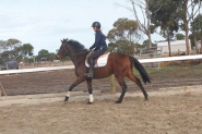 Pretty Potential Plus Mare on HorseYard.com.au