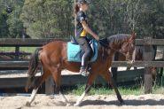 Rising 4yo ASH - Kobe on HorseYard.com.au