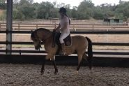 Beautiful Buckskin Pony on HorseYard.com.au