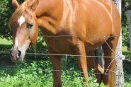 Stallion at Stud on HorseYard.com.au