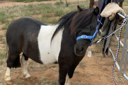 Leo on HorseYard.com.au