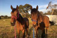 Loving home wanted on HorseYard.com.au