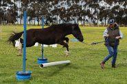 Stunning Mule on HorseYard.com.au