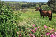 Matilda on HorseYard.com.au