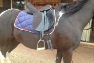 Wintec Lite All Purpose Saddle on HorseYard.com.au