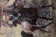 Lovely little mare on HorseYard.com.au