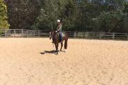 Registered 4yo Stock Horse Gelding on HorseYard.com.au