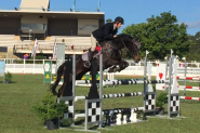 Beautiful Moving Showjumper on HorseYard.com.au