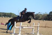 One in a million all-rounder on HorseYard.com.au
