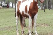 Expressions of Interest on HorseYard.com.au