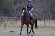 NZ Thoroughbred Bay Mare on HorseYard.com.au