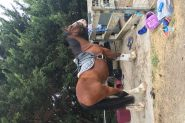 EOI for lease with possibility to buy- Clydie X Warmblood  on HorseYard.com.au