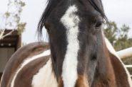 Wanted Beginners Horse wanted on HorseYard.com.au